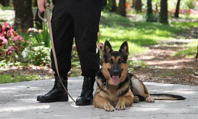 Funkcjonariusze chcieli zaprezentować uczniom pracę psów policyjnych. Jeden z nich znalazł w plecaku marihuanę